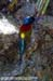 Green-tailed Sunbird (endemic)